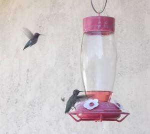Recipe for Hummingbird food