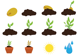 Images of planting and sun and water.